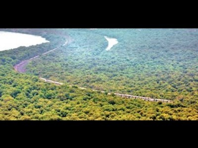 Maharashtra Mangrove Cover Up 37% In National Survey, Thane & Navi Mumbai Fare Best