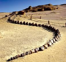 New Dinosaur Species Found In Sahara Desert Of Egypt